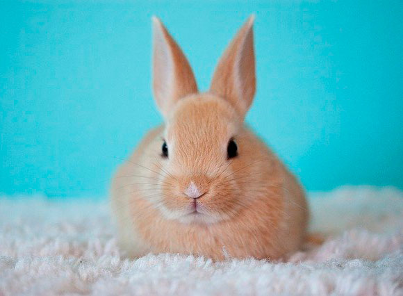 Conejos son mascotas fáciles de cuidar