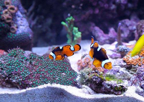 peces, mascotas pequeñas para niños