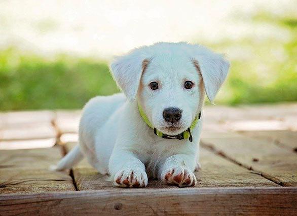 perros son mascotas fáciles de cuidar